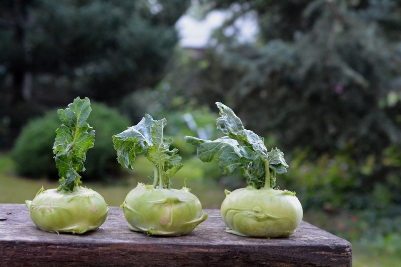 Antioxidant Kohlrabi that protects DNA from damage