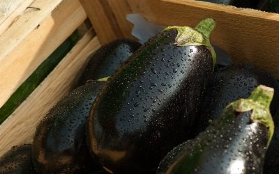 Is Aubergine bad for iron levels?